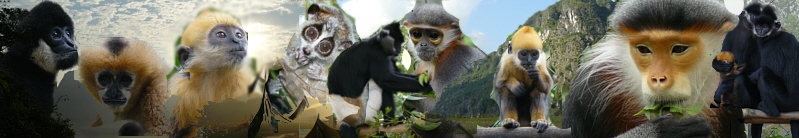Special: Endangered monkeys of Vietnam - Fancy Plants - Englisch